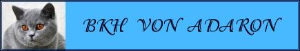bannerfans_1741370